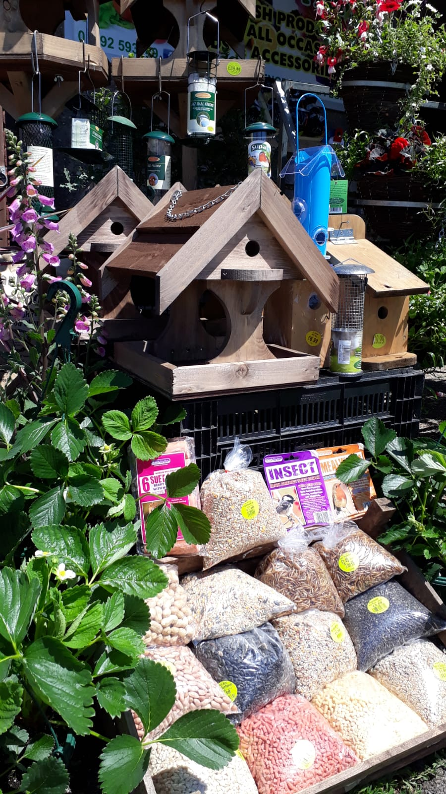 Bird Seed and more